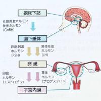 排卵誘起薬(hCG、GnRHa)