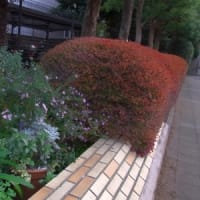 11月に咲く花に会いに行こう