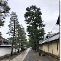 京の冬の旅 妙心寺「明智風呂」特別公開へ行ってきました~