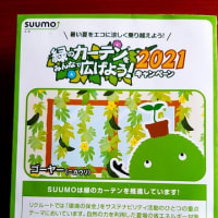 番外 ゴーヤの種/SUMO