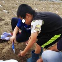 10月16日(土) つばさ舞子 芋掘りに行きました!
