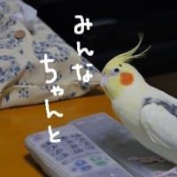 京都五山送り火(8月16日)
