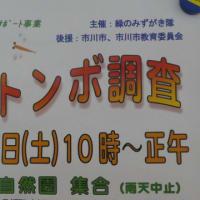 緑の楽交『秋のトンボ調査』が9月26日に開催されるよう@北方ミニ自然園