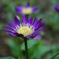心に花と棘が隣り合わせ