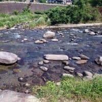狩野川、リハビリ鮎釣り4回目
