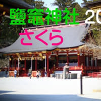 鹽竈神社2020 さくら