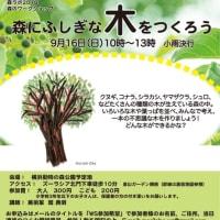 9/16 WS「森でふしぎな木をつくろう」のお知らせ