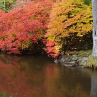 白駒池の紅葉を振り返ります