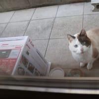 外猫ちゃんに餌をあげたら・・・