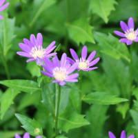 つれづれなるままに  4058  庭の花