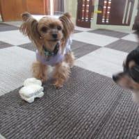 20/02/14 犬の幼稚園BuddyDog