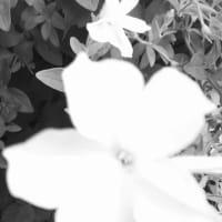 断片7/11(櫻井郁也ダンスノート2019)