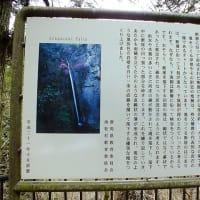 令和2年3月31日(火) ハナネコノメと滝♪