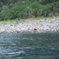 ボートツアーで、熊とアザラシを見ました!