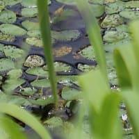 樫原湿原と周辺の植物(5)