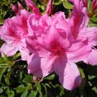 春の花と花言葉