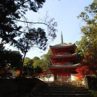 瀬戸内シーカヤック日記: 岡山の高梁川への遠征SUP旅で、『料理旅館 鶴形』、『紅葉の宝福寺』、『府中焼き』を堪能
