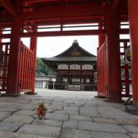 ミモロといっしょに京散歩。雨の「下鴨神社」。(注「足つけ神事」の日程変更!参拝者は、近畿圏2府4県の住民限定に)