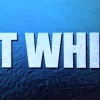 グレート・ホワイト