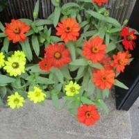 寺内町界隈の花