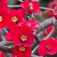 お寺の裏山で見た花(オオハラセイトウ、他)