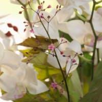 冬桜の季節
