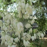 高田本山の花&休憩