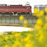 春の「カシオペア訓練列車」を撮る・・・!!