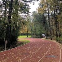 激動の陸上界と充電の秋