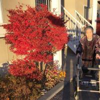 🍁紅葉が真っ盛り😄