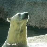 毛がフサフサなポロロちゃん♪(10月5日)