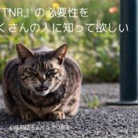 TNRとは何か?
