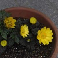 庭の花 (No 2204)