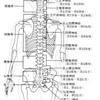 背骨の構造と12のポイント/病気との関係