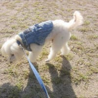 とても寒い朝だったんです。公園に散歩。今夜が満月だったんじゃ、失礼。