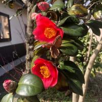 四季2021(11)   桜散り私に夏が訪れた 庭先の花たちが萌えている