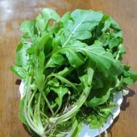 貴重なフレッシュ野菜