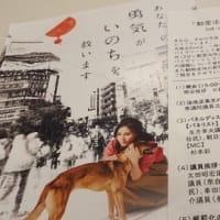 公益財団法人動物環境・福祉協会Eva主催による『動愛法改正のふりかえりと今後の課題』に参加させて頂きました。