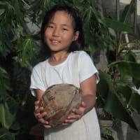 孫が見つけた椰子の実一つ