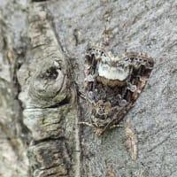 河畔林で見られた昆虫 ②