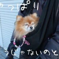 いざ鎌倉へ