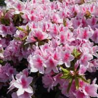 静かな公園で清楚に咲き誇る花