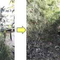 台風で倒れてしまった約8mのモチノキ伐採作業
