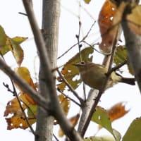 ブラブラ~フォト 小鳥が見つかった(11月17日版)