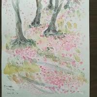 """鶴岡たか スケッチ展  ちりさったさくら""""春"""" 告知!"""