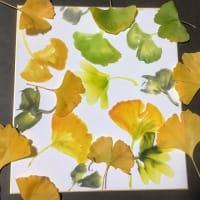 墨彩画で描く 「銀杏」の色紙