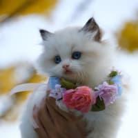 超可愛い猫ちゃんの写真、癒やしを超えた天使のようなモフモフ感!!