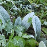 11月5日 初霜