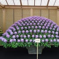 「大作り花壇」/新宿御苑・菊花壇展