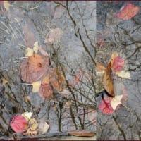水中落ち葉絵図